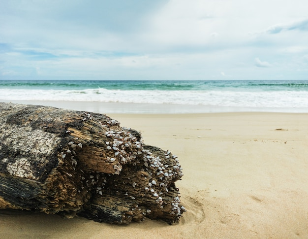 Decayed timber on beautiful beach background. Premium Photo