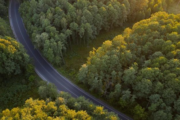 夜明けの落葉広葉樹林。太陽光線が木のてっぺんを照らします。アスファルト道路が森の中を走っています。 Premium写真