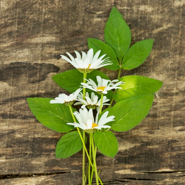 Decor of wild flowers on green leaves Free Photo