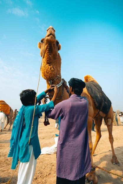 Decorating camel for fight Premium Photo
