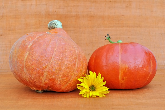 Decoration on orange background with pumpkins and a daisy flower Premium Photo