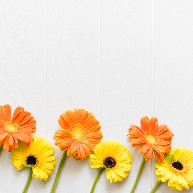 Decorative colorful daisy flowers on a background Free Photo