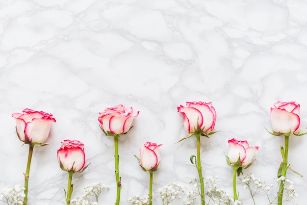 Decorative colorful roses on a background Free Photo