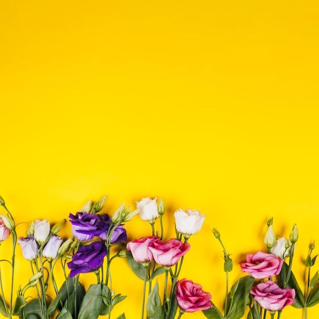 Decorative colorful roses Free Photo