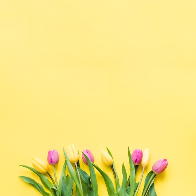 Decorative colorful tulip flowers on a background Free Photo