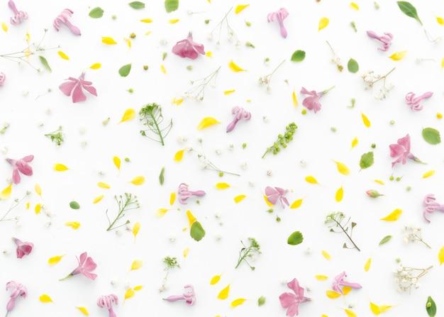 Decorative floral pattern Free Photo