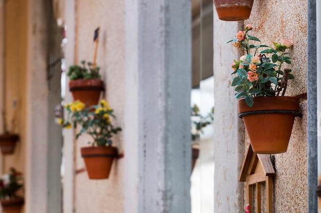 Decorative flower vases on the street Premium Photo