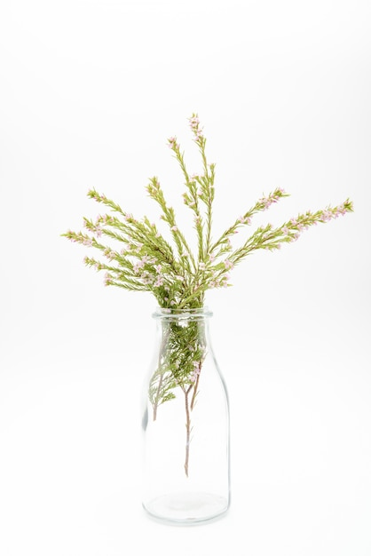 Decorative Plants In Transparent Glass Bottle Isolated On White Background Premium Photo