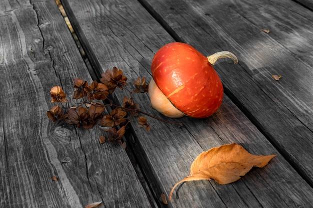 Декоративная тыква и сушеная веточка хмеля humulus для дизайна на тему осени, урожая Premium Фотографии