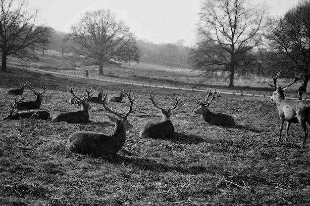 Deer group in the field Free Photo