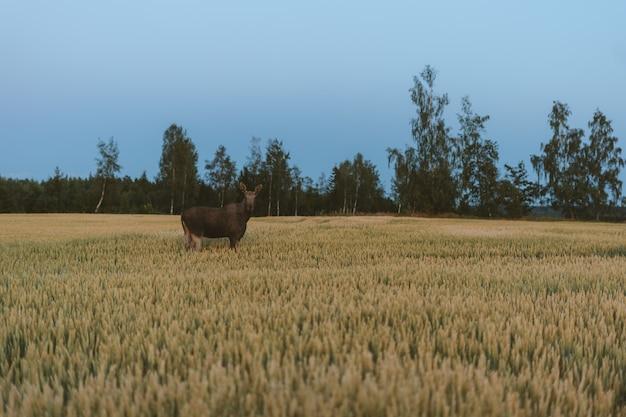 ノルウェーの緑の木々に囲まれた草原の鹿 無料写真