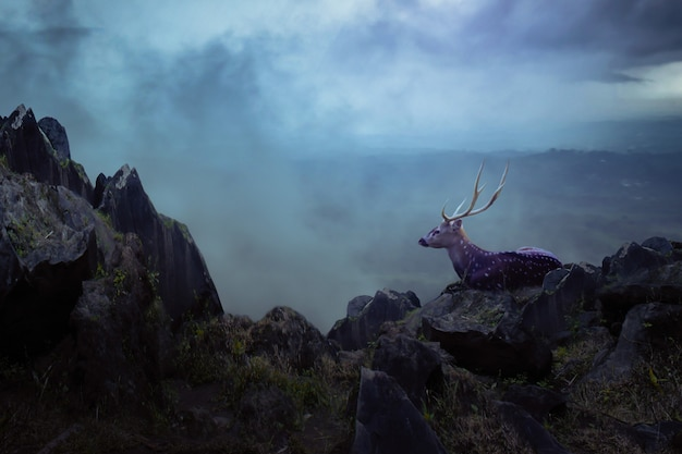 Deer in the mountain Premium Photo