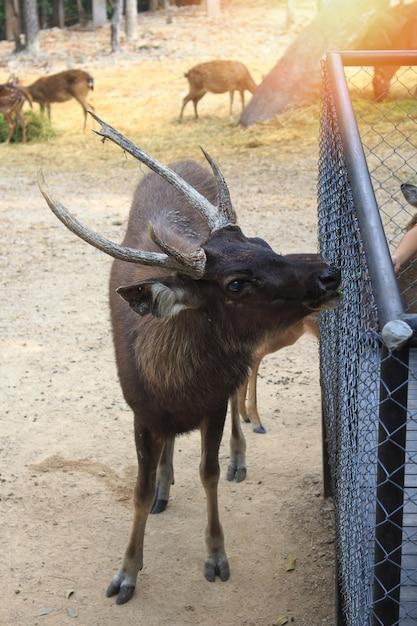 Deer standing in the zoo. Premium Photo