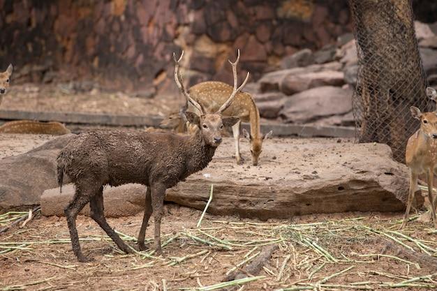 Deer Premium Photo