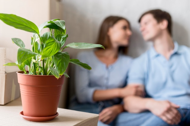 Coppia sfocata prendendo una pausa dall'imballaggio per spostarsi con la pianta Foto Gratuite