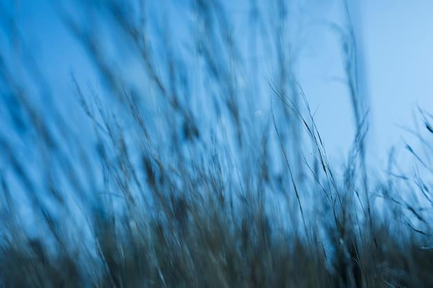 Defocused grass against blue sky Free Photo
