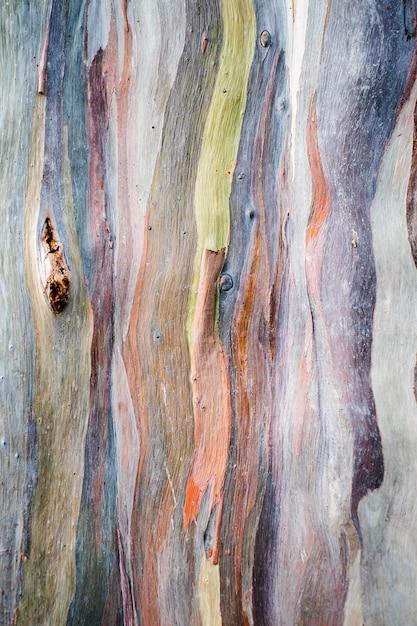 カラフルなユーカリdeglupta木の樹皮の抽象的な背景パターン Premium写真
