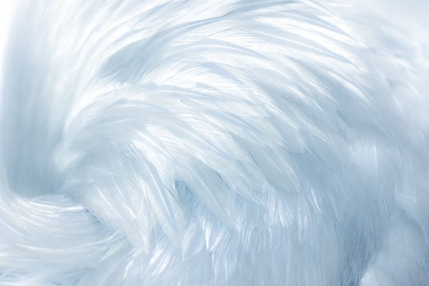 Delicate soft white bird feathers as a background or backdrop Premium Photo