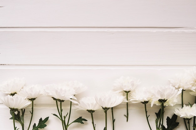 Delicate white flowers aligned in front of a white background with delicate white flowers aligned in front of a white background with space on the top free mightylinksfo