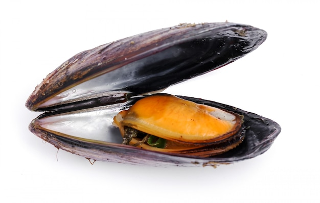 Delicious mussels on white Free Photo