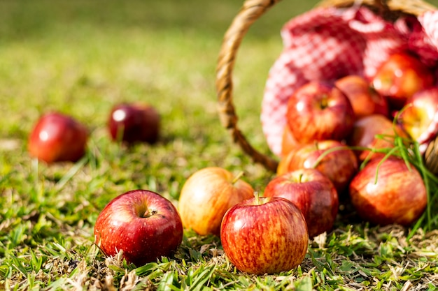 Delicious red apples in straw basket close-up Free Photo