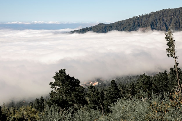 Dense clouds in the mountain forest Free Photo
