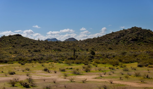 Desert and mountain near arizona Premium Photo