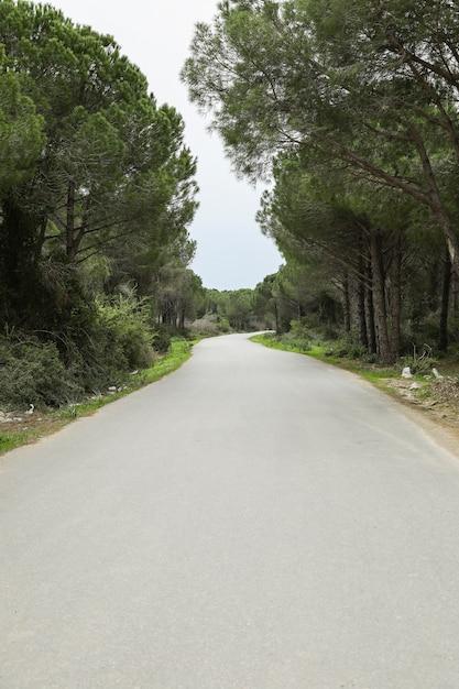 森を抜ける砂漠の道 Premium写真