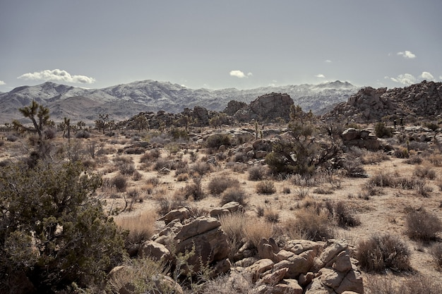 Пустыня с камнями и сухими кустами с горами на расстоянии в южной калифорнии Бесплатные Фотографии