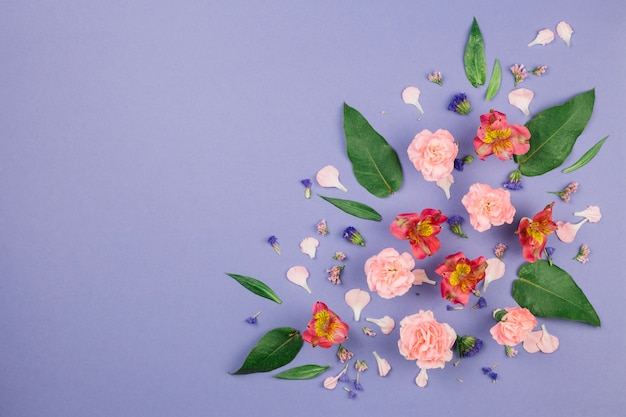 Design made of alstroemeria; carnations; leaves and limonium flowers on purple background Free Photo