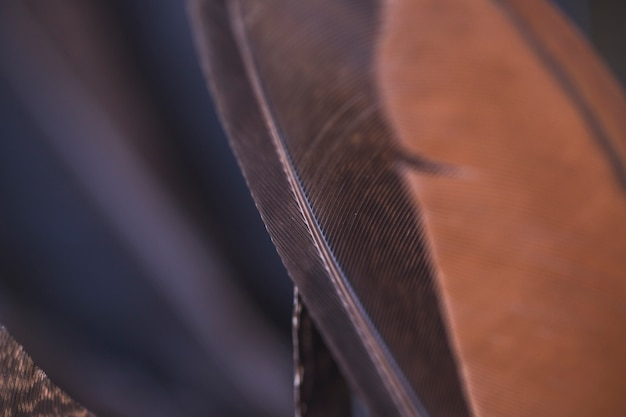Detail of brown and black feather backgrounds Free Photo