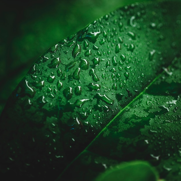 Detail of a green leaf Free Photo