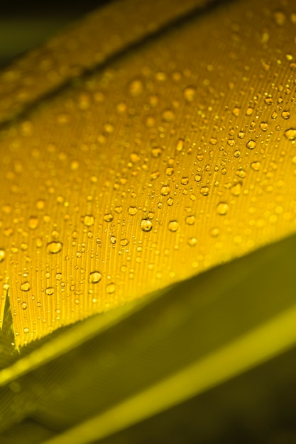 Detail of yellow feather with water drops Free Photo