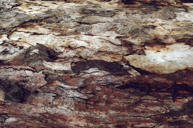 Detailed texture of tree wood Free Photo