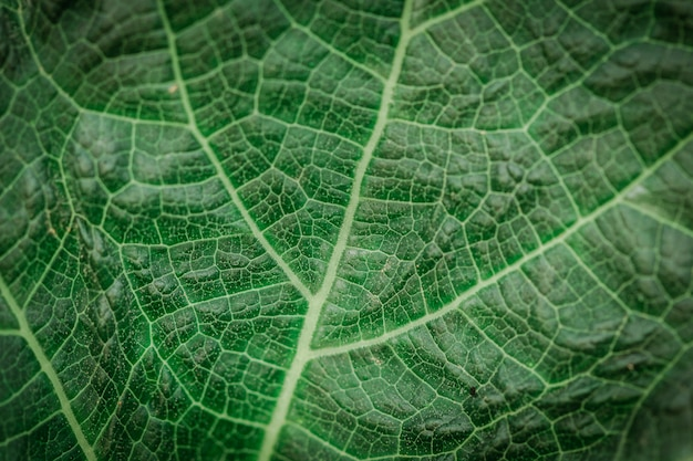 Details and textures of green leaves in abstract form Photo