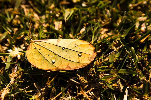 Dew drops on closed leaf over the green grass Free Photo