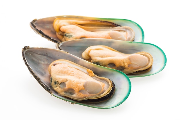 Diet mussels tasty white group Free Photo