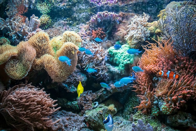 Different colorful fishes yellow tang clownfish ctenochaetus tominiensis flame angelfish Free Photo