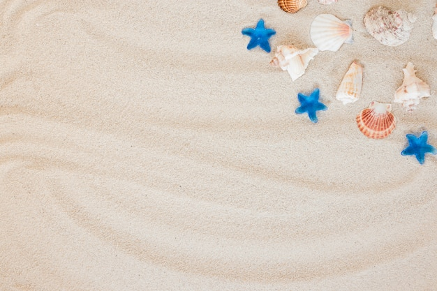 Different sea shells on sand Free Photo