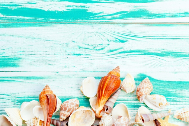 Different sea shells Premium Photo