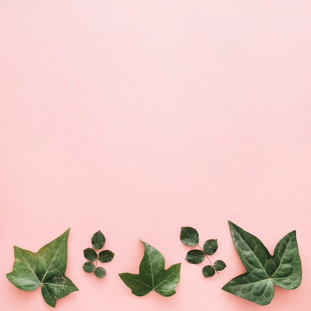 Different tropical leaves arranged in a row on pink background Free Photo