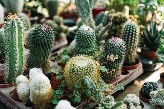 Different type of cactus plants growing in greenhouse Free Photo