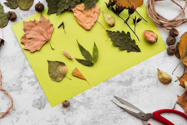 Different type of dried autumn leaves on green mint paper on textured backdrop Free Photo