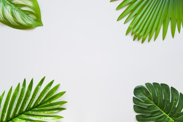 Different type of green leaves on the corner of the white background Free Photo