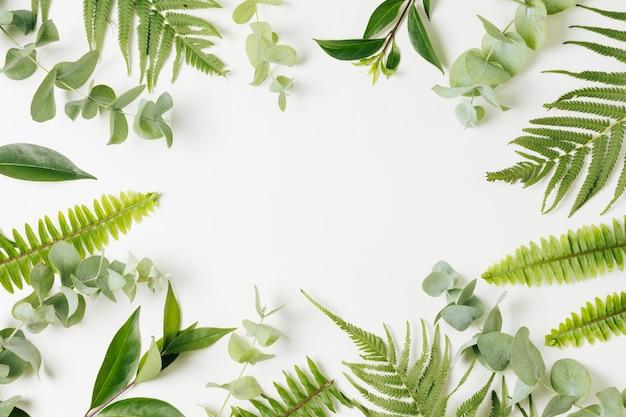 Различные виды листьев с копией пространства на белом фоне Premium Фотографии