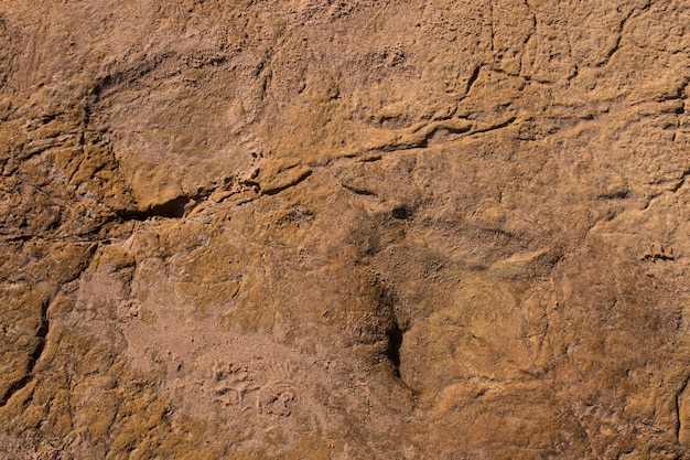 Dinosaur footprints on stone Premium Photo