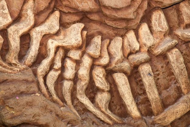 Dinosaur, fossil Premium Photo
