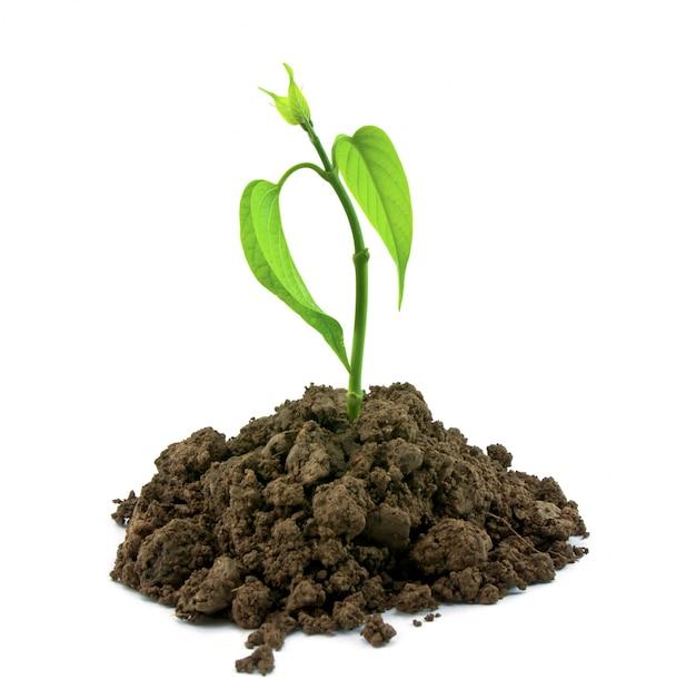 Ecologia sporco terra primavera del suolo Foto Gratuite