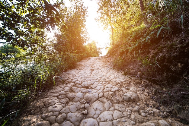 Dirt road in the countryside Free Photo