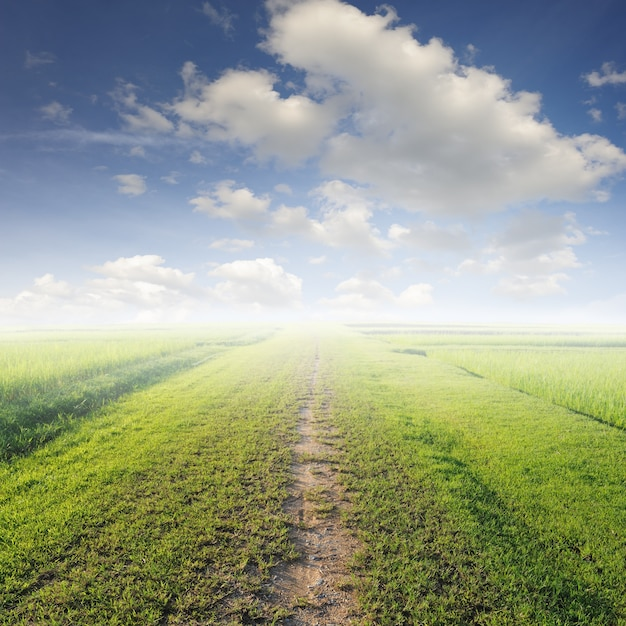 Dirt road in a meadow Free Photo
